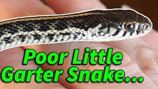 How to Prevent & Help Neurological Issues in Snakes by Snake Discovery