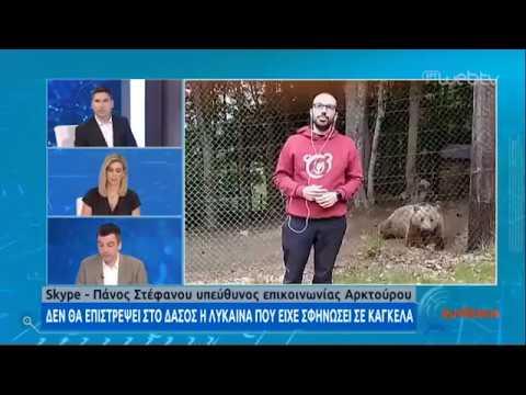 Δεν επιστρέφει στο δάσος η λύκαινα που έσωσε ο «Αρκτούρος» | 29/05/2020 | ΕΡΤ