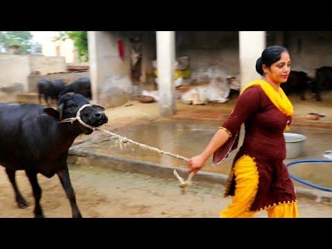 My 4:30 PM Evening village routine🧡 Village Life of Punjab India 🖤 Indian rural life of Punjab