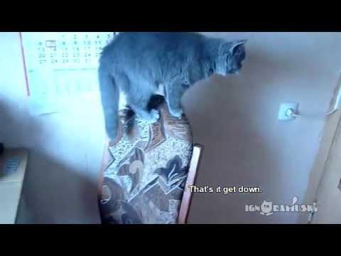 un uomo chiede al suo gatto di chiudere la porta, guardate cosa fa...
