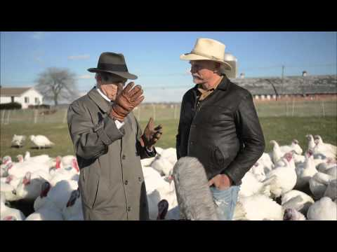 How do small farms stay in the turkey business?