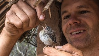 Caring for a baby bird in the hut