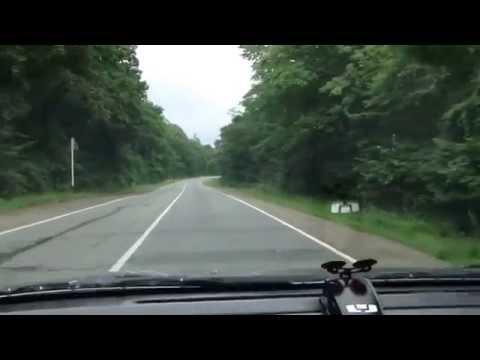 Девственный лес видео фото 779-802