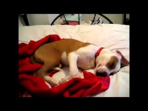 Khi CHÓ ngủ mơ - Cười đau bụng =))