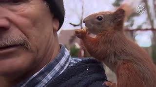 Pan Tadeusz uratował wiewiórkę, która teraz biega po nim jak po drzewie