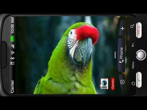 Video of Amazing Bright Macaw Parrot