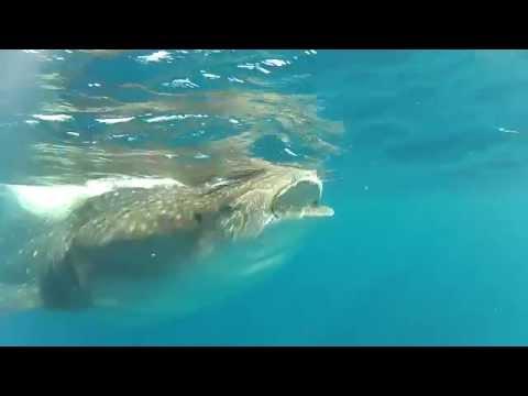 Pro Dive Mexico WBDR 2014