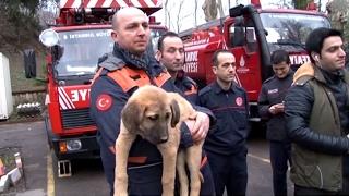 В Турции из глубокого колодца спасли щенка с помощью роботизированной руки