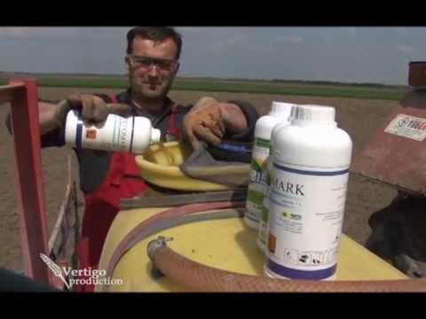Herbicidi Terbis i Acetomark za zemljišno tretiranje kukuruza