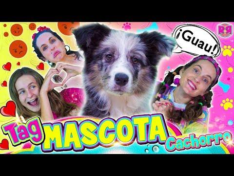 TAG de la MASCOTA CACHORRO  Cosas sobre mi perro   Vídeo de risa divertido de perros cachorros
