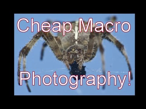 Canon dSLR Macro Photography On The Cheap – M42 Lenses & Extension Tubes!
