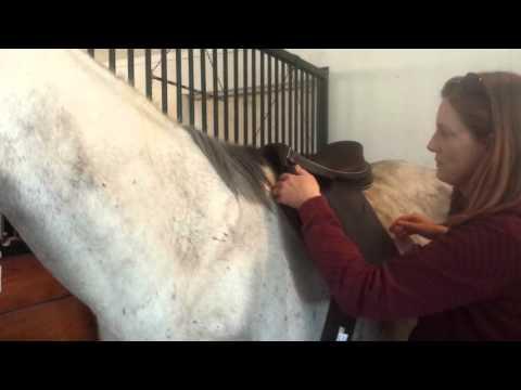 Saddle Does not Fit and Dark Horse Saddlery won't let me return it