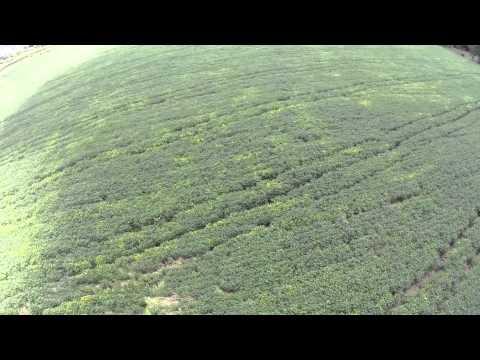 Santa Maria Drone Video