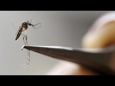 Ρίο 2016: Υπερβολικές ή δικαιολογημένες οι ανησυχίες για τον ιό Ζίκα;