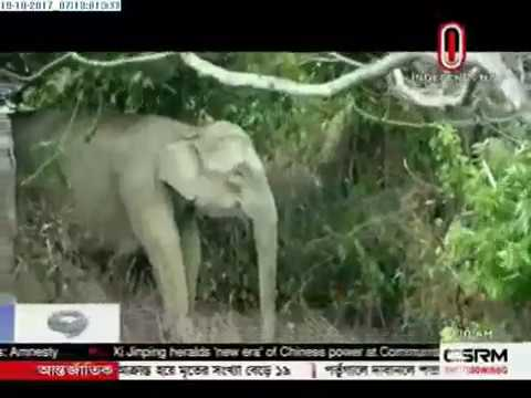 Wild elephants kill 6 Rohingyas (19-10-2017)