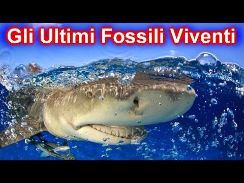 10 fossili viventi che ancora possiamo ammirare!