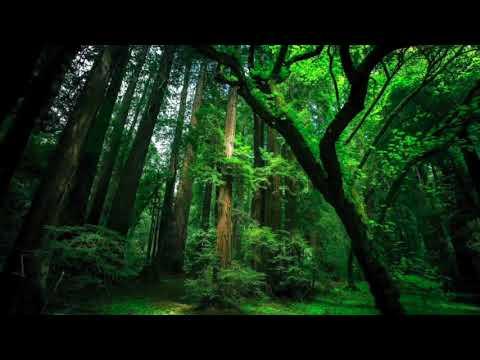 ASMR  Suara Air Hutan & Burung