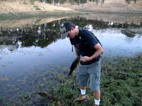 Largemouth Bass – pond fishing