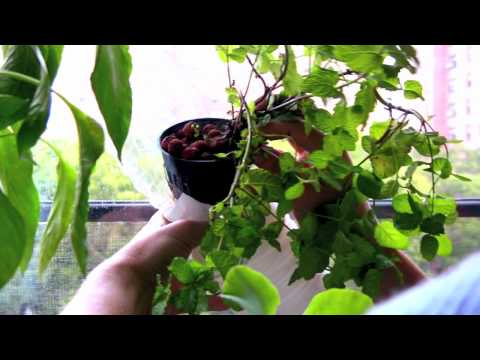 0 Urban Gardening / The Window Farm
