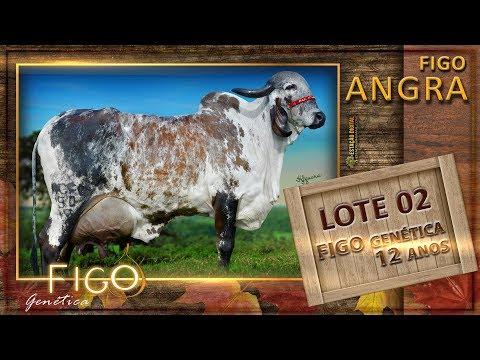 LOTE 02 - FIGO ANGRA