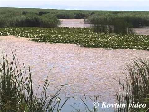 © Красота природы озера Кугурлуй  Зе натарал беаати оф зе лаке Кагарлаи
