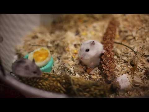 Животные принимают подарки от Наташи