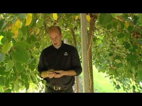 L1 KOPlopers- Mertz Kleinfruit St Geertruid