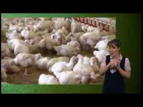 BBC Countryfile Campylobacter clip