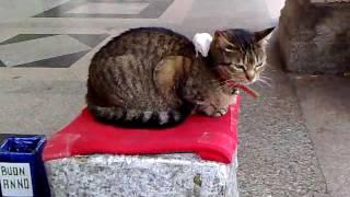 А кто сказал, что мыши коту не друзья?