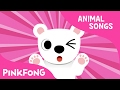 Paw Paw Polar Bear | Polar Bear | Animal Songs | Pinkfong Songs for Children
