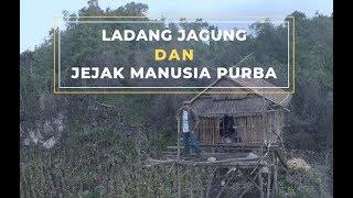 Video Jagung & Jejak Manusia Purba | Ekspedisi Pulau Muna (4) MP3, 3GP, MP4, WEBM, AVI, FLV Desember 2018