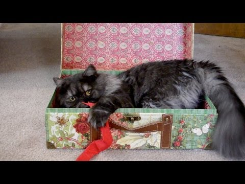 pets - Merry Christmas and Happy Holidays from the Talking Animals Channel Please Share and Enjoy! :) Thank you to everyone who submitted their clips. General submi...