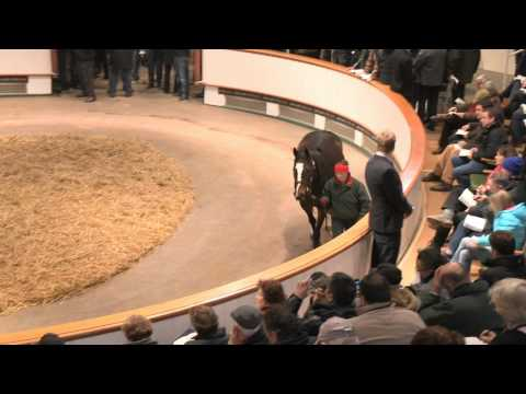 2013 Tattersalls December Mare Sale Day 1