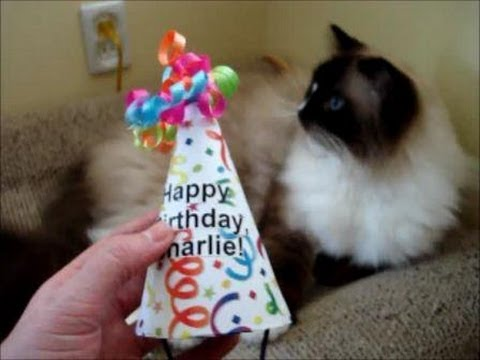 0 How to Make a Cat Birthday Hat