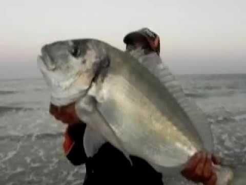 RAUL MARIO PESCA DORADA GIGANTE  !! 7 KILOS SURFCASTING GOLIATH FISHING