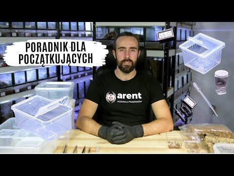 Jak zacząć hodowlę ptaszników? - akcesoria, karmówka, warunki | arent.pl