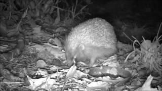 Wildlife Trail Camera - 26.10.2016
