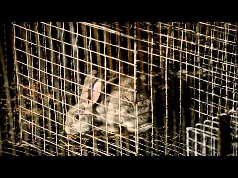 Ловушки для кроликов смотреть