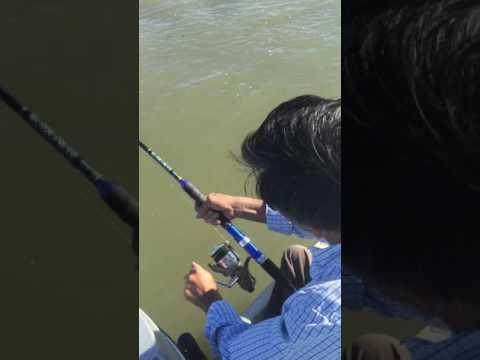 Alviso fishing