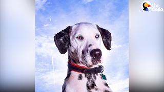 بالفيديو.. كلب أصم يتعلم لغة الإشارة ثم يبدأ عمله كمعالج