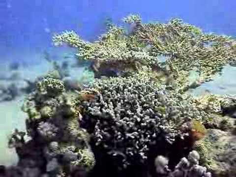 Buceo con Emperors Divers (Egipto)