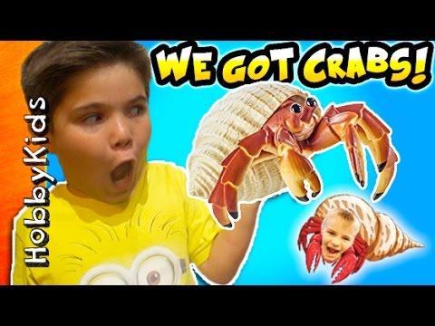 Hermit CRAB Pets! Surprise Toys in Tank + Habitat Set Up. Funky Shell Crab Homes HobbyKidsTV