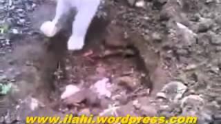 فيديو مؤثر لقطة تدفن صغيرها.. شاهد كيف تغلبت عاطفة الأمومة؟!