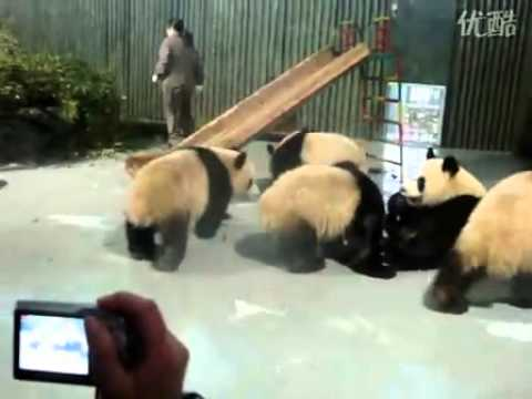 pandas-lunch-time