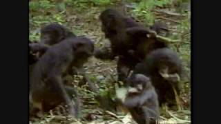 Video Out in Nature: Homosexual Behavior in the Animal Kingdom (2 of 6) MP3, 3GP, MP4, WEBM, AVI, FLV April 2019
