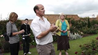 #487 David Austin Roses 2011 - Vermehrungsproblematik der Rose Munstead Wood