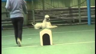 Movie Poodle Training