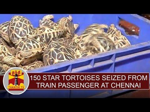 Star-Tortoises-seized-from-train-passenger-at-Chennai-Central-Station