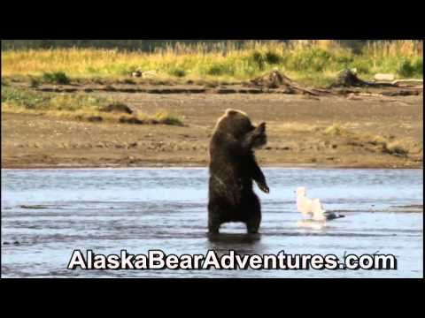 Bear Viewing Adventures Homer Alaska