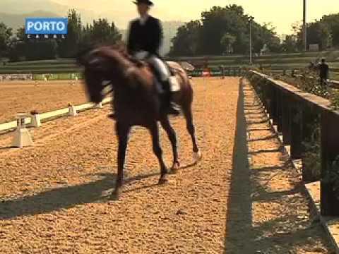Reportagem da 'PortoCanal' sobre a IV Feira do Cavalo de Ponte de Lima